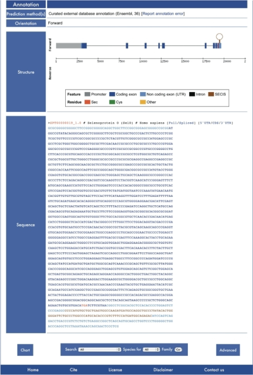 Transcript Report of human SelO. Note the color coded gene structure and the spliced transcript sequence with sequences features colored accordingly. Other sequence views are one click away at links at the end of the sequence ID line.