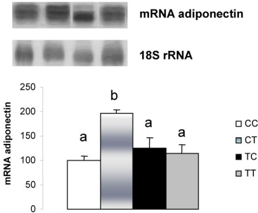Adiponectin mRNA quantification in retroperitoneal white adipose tissue. CC, mothers fed C diet and offspring fed C diet; CT, mothers fed C diet and offspring fed T diet; TT, mothers fed T diet and offspring fed T diet; TC, mothers fed T diet and offspring fed C diet. Data are means ± SE of six determinations per group. Results are expressed in arbitrary units, stipulating 100 as the control value. p < 0.05.