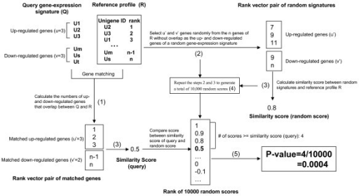 The method for P-value calculation. (1) Calculate the numbers of up- and down-regulated genes that overlap between Q and a reference profile R; let the numbers be u' (≤ u) and v' (≤ v), respectively. (2) Select u' and v' genes sequentially and randomly from the n genes of R without replacement, and construct a random signature; (3) Calculate the similarity score between R and the random signature; (4) Generated a total of 10,000 random scores by repeating steps 2 and 3. (5) The p-value associated with the similarity score (query score) between query Q and reference R is the proportion of random scores that are no less than the observed similarity score (query score).