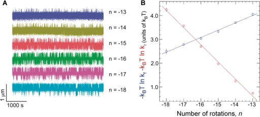 Kinetic analysis of cruciform extrusion and rewinding for Charomid 9-5 kb DNA. (A) As negative DNA supercoiling increases, progressively less time is spent in the B-DNA state and more time is spent in the extruded-cruciform state. Experiments were performed at F = 0.45 pN. (B) Free energy barrier to cruciform extrusion (blue) and rewinding (red) as a function of negative supercoiling. The barrier to cruciform extrusion decreases linearly with negative supercoiling at a rate of 0.31 ± 0.015 kBT/turn (B-DNA is destabilized by unwinding), while the barrier to rewinding increases linearly by 0.71 ± 0.014 kBT/turn (cruciform DNA is stabilized by unwinding). At least ∼300 events were measured at each rotation point to determine each mean transition rate.
