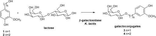 Enzymatic synthesis of galactosides 3 and 4 catalyzed by β-galactosidase from Kluyveromyces lactis.Acceptor substrates (250 mM), lactose (donor; 1 M) and MgCl2 (0.01 M) were suspended in phosphate buffer (50 mM and pH 6.5) and incubated at 35°C prior to an addition of 12 U/mL β-galactosidase.