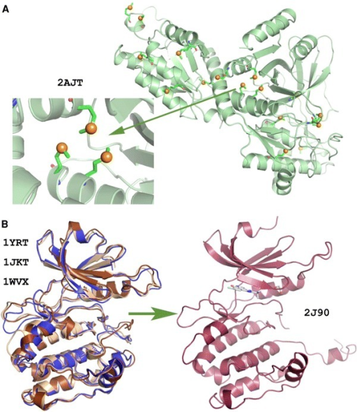 Examples for widely used structure determination methods. aStructure of E. coliArabinose Isomerase (PDB 2AJT) determined by single-wavelength anomalous diffraction(SAD). Selenomithionine residues are also shown (Manjasetty and Chance 2006). bStructure of DAPK3 (PDB 2J90) determined with the molecular replacement (MR) method using the template prepared by homolog structures (PDB 1YRT, 1JKT, 1WVX) (Pike et al. 2008)