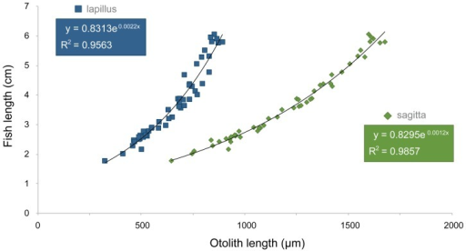 Relationship between length of otoliths (µm) and body length (cm) of the eastern mosquitofish Gambusia holbrooki.