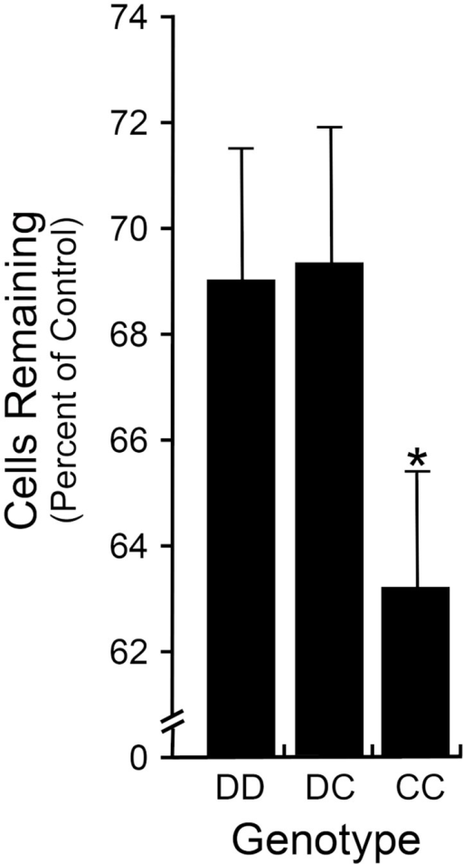 DBA/2J.BALBRgcs1 substrain mice exhibit a susceptible phenotype after optic nerve crush.Bar graph showing cell loss after optic nerve crush (mean ± sem) in DBA/2J mice carrying the BALB/cByJ Rgcs1 allele (C). Mice with the CC allele exhibit a significantly greater percentage of cell loss in the ganglion cell layer than either DD or DC mice (P = 0.024, CC compared to the DD and DC animals combined). This difference in phenotype mimics the difference between purebred DBA/2J mice compared to purebred BALB/cByJ mice [10]. A minimum of 20 mice was assayed per group.