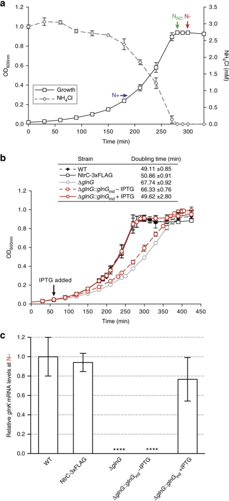 Establishing N-starved growth conditions in E. coli.(a) The growth arrest of wild-type E. coli NCM3722 cells coincides with ammonium run out (at t=NRO) in the minimal Gutnick medium. The time points at which the E. coli cells were sampled for downstream analysis are indicated (t=N+ and t=N− represents growth under nitrogen replete and starved conditions, respectively). (b) The growth curves of wild-type NCM3722, NCM3722:glnG-FLAG (NtrC-3xFLAG), NCM3722:ΔglnG and NCM3722:ΔglnG::glnGind (−/+ IPTG). The quantitation of the doubling times is also given. (c) Graph showing the relative levels of glnK mRNA expression as fold-change in cells sampled at t=N+ and t=N−. Error bars on all growth curves represent s.d. (where n=3). Statistical significant relationships from One-way ANOVA analysis are denoted (****P<0.0001).