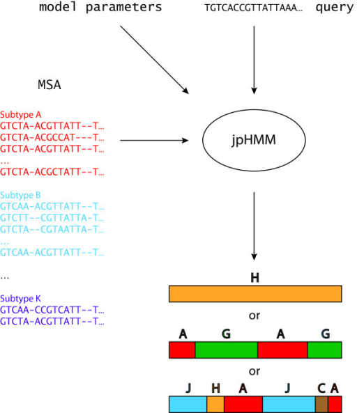 Outline of the information flow of jpHMM. As input, jpHMM expects an MSA partitioned into subtypes as well as an (unaligned) query sequence. Furthermore, the model parameters, based on which different details of the underlying model are determined, have to be set by the user. That is, the emission and transition probabilities and certain parts of the topology of the model are set based on the parameters. jpHMM then derives the most probable path through its pHMMs. As output, jpHMM assigns each position of the query sequence to a subtype of the MSA. Here, three possible outputs are shown.