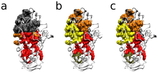 -amylase homologs.Clusters (modules) found in an extension of the modularity inference performed in [1], inclusing 135 homologs of the catalytic domain of the -amylase. a) Modules inferred without constraining the topology with inter-residue contacts. b) Modules inferred constraining the topology in A with inter-residue contacts. c) Modules inferred by prefiltering the results in B, before significance testing.