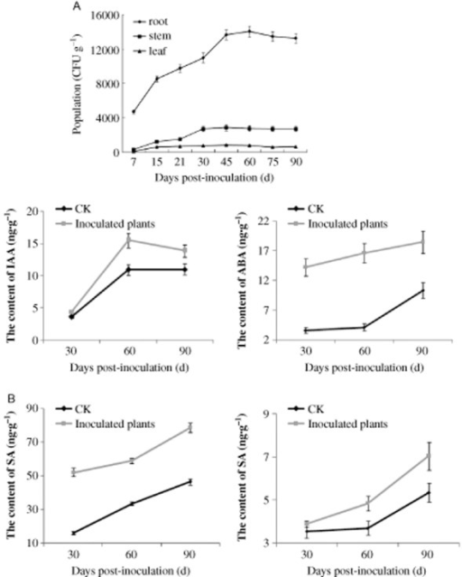 Reproduction dynamics of strain ZJSH1 (A) and their effect on the contents of the four main phytohormones in the culture seedlings (B) (CK: control).