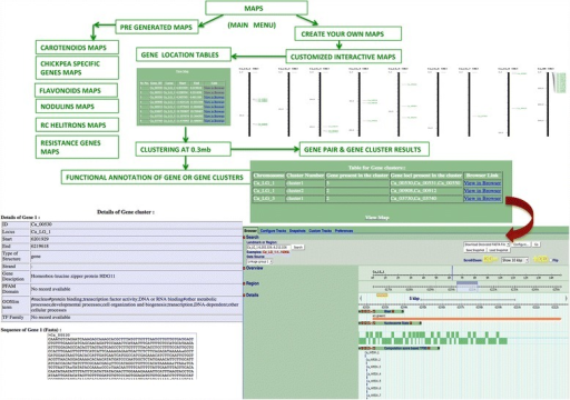 The Maps Tool of CGWR. This tool can be used for generating customized genome wide interactive maps of genes and gene families of interest. Six kinds of pre-generated maps are available, along with clustering options. Seamless integration with the chickpea genome browser as shown in the lower right panel enables further analysis.