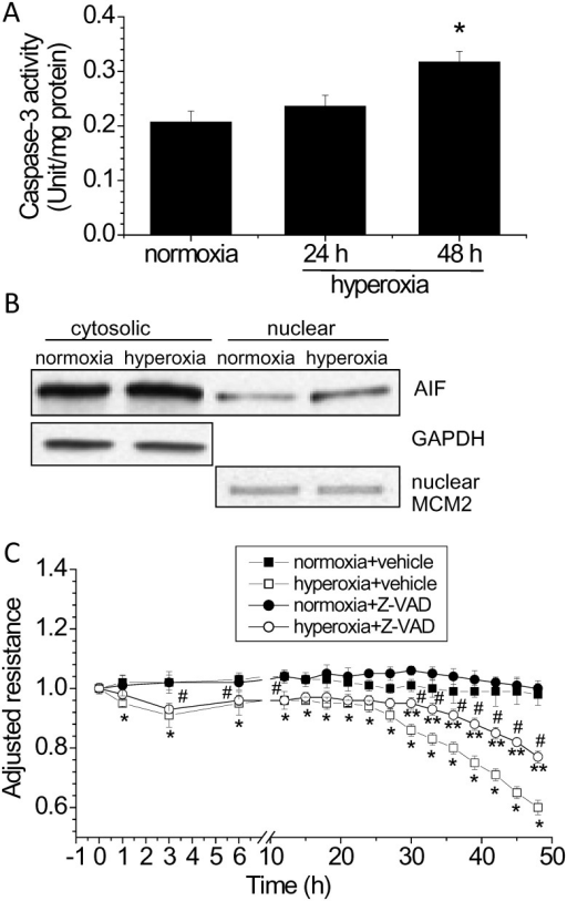 Apoptosis contributes to hyperoxia-induced disruption of lung endothelial barrier.(A and B) PAECs were exposed to normoxia or to hyperoxia for 24 to 48 h after which caspase-3 activity (A) and nuclear AIF protein level (B) was assayed. (C) PAECs were treated with and without the caspase-3 inhibitor Z-VAD-FMK (50 μM) and exposed to normoxia and hyperoxia for 48 h. TEER was continuously monitored as described in Materials and Methods. Results are expressed as mean ± SE; n = 4. * P<0.05 vs normoxia; **P<0.05 vs. hyperoxia+vehicle; #P<0.05 vs. normoxia+Z-VAD.