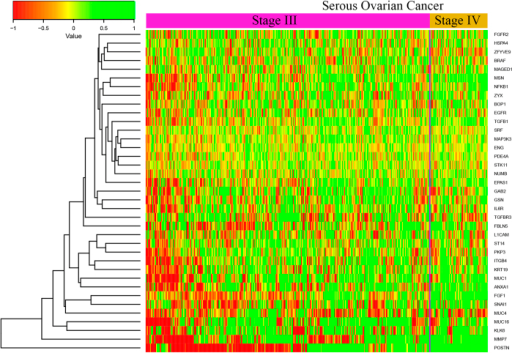The heatmap for the 35 genes whose expression are increasing from stage III to stage IV in TCGA ovarian cancer samples.
