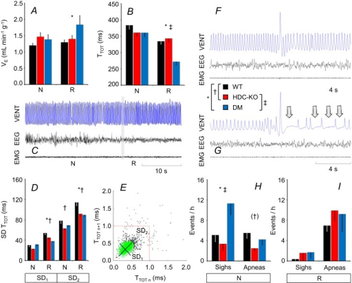 Sleep-related changes in breathing.(A) and (B), values of minute volume (VE) and breath duration (TTOT), respectively, during non-rapid-eye-movement sleep (N) and rapid-eye-movement sleep (R). In this and the other panels, data are means ± SEM in HDC-KO (n = 11 during N, n = 10 during R), DM (n = 7), and WT (n = 11). (C) Representative tracing (plethysmographic ventilator signal, VENT; electroencephalogram, EEG; electromyogram, EMG) during a transition from N to R in a DM mouse. The decrease in TTOT during R is evident from the occurrence of more closely spaced deflections of the VENT signal with individual breaths. The grey vertical bar shows the transition point between states. (D) Short-term (SD1) and long-term (SD2) variability of TTOT. (E) Representative Poincaré plot during N in a DM mouse, in which abscissa and ordinate of each point indicate TTOT of successive breaths. SD1 and SD2 correspond to the standard deviations around axes (black segments) oriented with or orthogonal to the line of identity of the Poincaré plot, respectively. SD1 and SD2 are computed excluding extreme values of TTOT (black points). The red lines mark the threshold for apnea detection (i.e., three times the average TTOT value). (F) and (G), representative tracings during N in a DM mouse showing augmented breaths (sighs) either isolated (F) or followed by breathing pauses (apneas; G, arrows). (H) and (I), frequency of occurrence of sighs and apneas during N and R, respectively. *, †, and ‡, P < 0.05, WT vs. DM, WT vs. HDC-KO, and HDC-KO vs. DM, respectively (t-tests). In panel H, the symbol (†) indicates a statistical tendency for the difference between HDC-KO and WT (P = 0.051, ANOVA; HDC-KO vs. WT, P = 0.017, t-test).