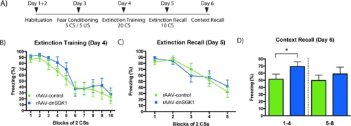 Influence of viral expression of dnSGK1 on contextual memory recall.(A) Rats were infused with rAAV-dnSGK1 or rAAV-EGFP into the mPFC. Four weeks post infusion rats underwent auditory fear conditioning and then extinction training and testing according to the timeline schedule shown. (B) During extinction training, CS-elicited freezing was comparable between the dnSGK1 and EGFP groups (effect for group F(1,18) = 0.7033, p = 0.4127; for trial F(9,162) = 23.15, p < 0.0001; interaction F(9,162) = 0.3374, p = 0.9613, two-way repeated measures ANOVA). (C) During extinction recall, there was no significant difference in freezing between dnSGK1 and controls (effect for group F(1,18) = 0.01975, p = 0.8898; for trial F(4,72) = 20.27, p < 0.0001; interaction F(4,72) = 0.7638, p = 0.5523, two-way repeated measures ANOVA). (D) When reexposed to the original context, rats infused with dnSGK1 showed significantly higher freezing during the first 4 min of testing (t(18) = 1.787, one-tailed Student's t test, *p < 0.05), but not during the second 4-min block. For underlying data, see S1 Data.