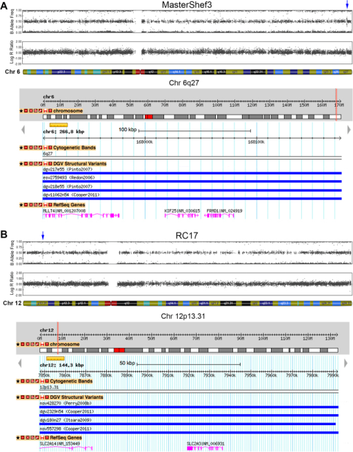 Duplications found in hESC lines that are present on the DGV.(A) Chromosome 6 ideograms from SNP array analysis of MasterShef3 revealed a 267 kb duplication near the telomere, which contained 3 genes, MLLT4, KIF25, and FRMD1. Duplications of this size, or greater, have been reported and annotated on the DGV with an estimated frequency of 2.82% in the human population. (B) A 144 kb duplication was observed on chromosome 12p13.31 of RC17 hESCs. This region contained two genes, SCL2A14 and SLC2A3, and is represented on the DGV (3.9% frequency in humans).