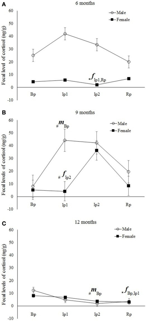 "Mean (±SE) of fecal cortisol levels (ng/g) in Callithrix jacchus in the Experiment II (Bp = baseline phase; Ip1 = initial isolation phase; Ip2 = late isolation phase; and Rp = reunion phase) at (A) 6 months, (B) 9 months, and (C) 12 months of age. A multivariate ANOVA test for repeated measures was performed with the Fisher posttest, p < 0.05. The symbol ""*"" indicates significant statistical differences and ""#"" a statistical tendency to differences in cortisol levels between the respective study phase and phases represented beside the symbol. The letters ""f"" and ""m"" indicate females and males, respectively."