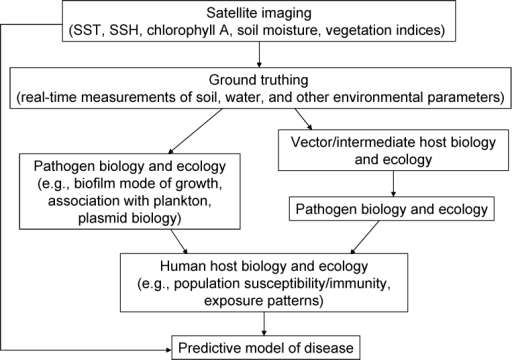 Components of a predictive model of infectious disease based on satellite imaging to assess environmental change. SST, sea surface temperature; SSH, sea surface height.