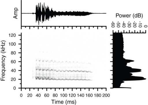 Oscillogram, spectrogram and magnitude spectrum of a Type 2 vocalization emitted by a male Glaucomys volans in proximity to a female conspecific.Shown is one of four calls emitted in the sequence. Both animals were house separately in a room lined with sound attenuating foam at McMaster University. Note the prominent frequency (FM) and amplitude modulations (AM) in the signal, and the clear presence of harmonics. Call duration  = 135 ms.