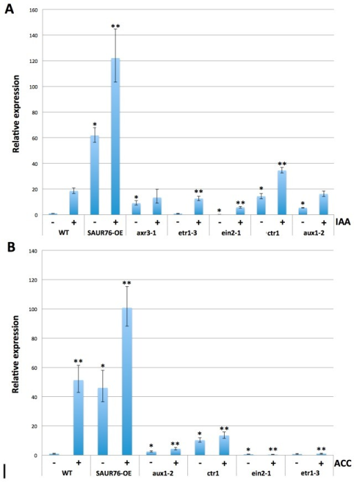 qRT-PCR expression analysis of SAUR76 in ethylene and auxin-mutants in control conditions and after treatment with ACC or auxin.A) Effect of 3 hr IAA or B) ACC treatment on SAUR76 expression levels in wild type, ethylene and auxin mutants. * points to a statistical significance towards the untreated WT and ** towards the treated WT (n=3, mean ± SE).