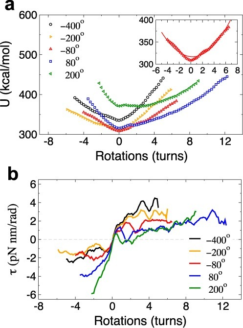 Torsional resilience of nucleosome arrays. (a) Total energy and (b) torque profiles of arrays with different Ψ0 as a function of the number of rotations. The insets show the energies for Ψ0 = 80° fitted to a harmonic function.