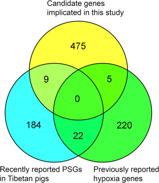 Comparison of our highlighted candidate genes with previous reports. A venn diagram showing shared and distinct candidate genes for high-altitude adaptation between our findings, the 247 previously reported hypoxia genes [14] and 215 positively selected genes (PSGs) recently identified in the Tibetan wild boars [20].