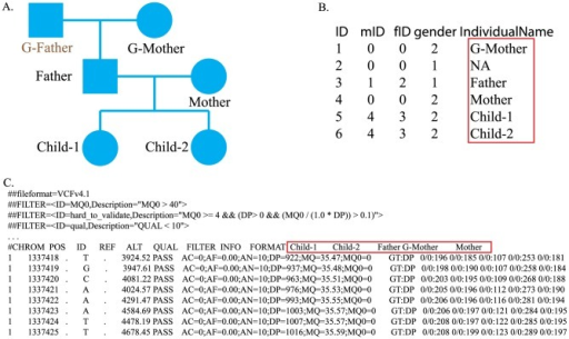 Illustration of input files.A.) Pedigree structure. B.) Pedigree structure file storing the pedigree structure shown in Fig. 2A. From the left-most column to the right-most column, the data are ID, mID (mother ID), fID (father ID), gender and sample name. C.) Part of VCF file. From the VCF file, we can find that the genome of the grandfather (G-Father) was not sequenced. We add his information to the pedigree structure file to avoid ambiguity. For example, if we include only one parent of two siblings in the pedigree structure file, it will be unclear whether they are full or half siblings. The sample name in the pedigree structure file should be the same as the sample name in the VCF file. When the actual genome was not sequenced, we set the corresponding sample name as NA in the pedigree structure file.
