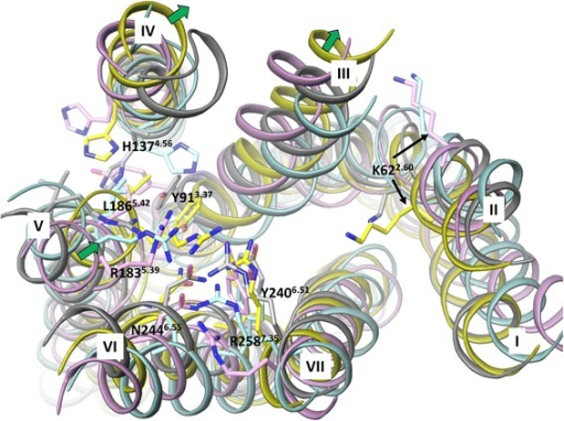 The superimposition of the FFA1 crystal structure and homology models base on the backbone of the helices in the extracellular side. The crystal structure, rhodopsin, β2 adrenergic and PAR1-based homology models are in yellow, cyan, pink and grey colour, respectively. Residues predicted to be important for ligand coordination based on mutagenesis and residue K622.60, representing the possible anchoring point for allosteric ligands are shown in stick-like representation. The green arrows indicate the large movement of helices 3, 4 and 5 in the FFA1 crystal structure compared to the homology models