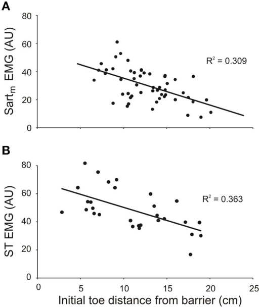 The magnitude of EMG activity in knee flexor muscles semitendinosus (ST) and medial sartorius (Sartm) increases with shorter initial toe distance from the barrier. The magnitudes of the EMGs were measured over the first 150 ms of burst onset. Data in (A) and (B) are from two different animals. EMG amplitudes measured in arbitrary units (AU).