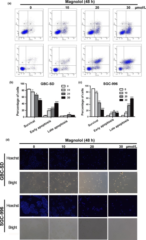 Magnolol induces apoptosis in gallbladder cancer (GBC) cells. (a–c) GBC-SD and SGC-996 cells were analyzed by flow cytometry with annexin V–FITC/propidium iodide (PI) staining after magnolol treatment. Annexin V versus PI plots from the gated cells show the populations corresponding to viable (annexin V−/PI−), necrotic (annexin V−/PI+), early apoptotic (annexin V+/PI−), and late apoptotic (annexin V+/PI+) cells. The data are presented as the mean ± SD of three independent experiments. (d) Changes in nuclear morphology during apoptosis were observed by Hoechst 33342 staining and visualized by fluorescence microscopy. *P < 0.05, **P < 0.01 versus control.