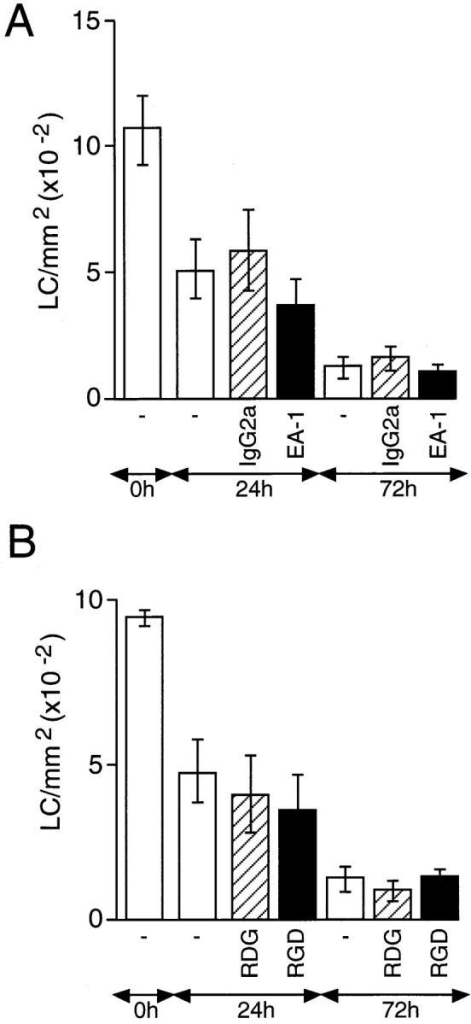 The effect of anti-α6  integrin antibody EA-1 and  GRGDS peptide on the migration of epidermal LCs in vitro.  Skin explants were incubated on  culture medium containing: (A)  50 μg/ml EA-1 (solid bars) or  control antibody (hatched bars);  (B) 500 μM GRGDS (RGD;  solid bars) or GRDGS (RDG;  hatched bars). Additional controls  included explants incubated on  medium containing no antibody  (open bars). The number of LCs/ mm2 was determined after 24  and 72 h of incubation and compared with fresh skin (0 h). Results are expressed as means ±  SD (n = 18). Treatment of explant cultures with EA-1 antibody failed to cause a significant  increase in the frequency of LCs  at 24 or 72 h compared with cultures containing no antibody or  an isotype-matched control antibody (A). Addition to explant  cultures of GRGDS also failed to  cause a significant increase in the  frequency of LCs at 24 or 72 h  compared with cultures containing no peptide or GRDGS.