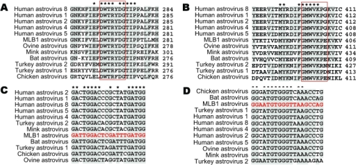 Astrovirus open reading frame (ORF) 1b alignments for design of pan-astrovirus primers. Astrovirus RNA polymerase sequences (ORF1b) were aligned at the amino acid level to define the conserved regions used for the design of primers SF0073 (A) and SF0076 (B). The numbers to the right of the sequences indicate the position of the last amino acid within each ORF1b sequence. Red boxes represent the specific regions that were reverse translated into the corresponding nucleic acid sequences used for the design of SF0073 (C) and SF0076 (D). Red sequences shown in the nucleotide alignments are the actual primer sequences.