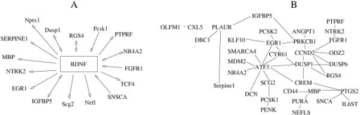 "Reported interactions between conserved correlated genes in human. Connections between the genes were created by accessing the literature using iHOP tool. (A) Interactions between correlated genes and BDNF. Arrows: ""↔"" co-expression or co-regulation; ""BDNF← ""regulation of BDNF; ""BDNF→"" regulation by BDNF. (B) Connections among correlated genes."