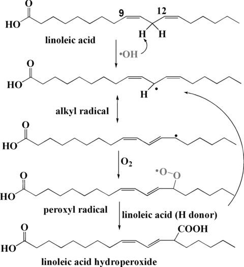 Mechanism of linoleic acid peroxidation initiated by ▪OH radical.