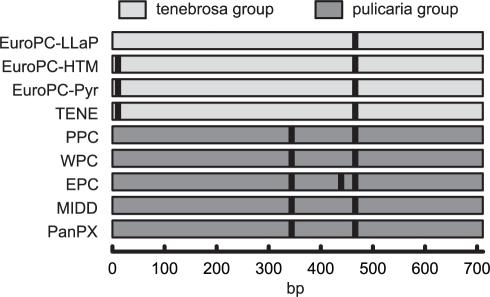 Restriction map of the mtDNA ND5 amplicon.The ApoI site at position 344 distinguishes species [11] of the tenebrosa group (European Daphnia pulicaria, EuroPC; and D. tenebrosa, TENE) from those of the pulicaria group (polar, PPC; western, WPC; and eastern D. pulicaria, EPC; D. middendorffiana, MIDD; and panarctic D. pulex, PanPX). Some lineages yield short fragments under 100 bp in size difficult to visualize using agarose gels but this does not affect scoring the individuals as either tenebrosa or pulicaria group.