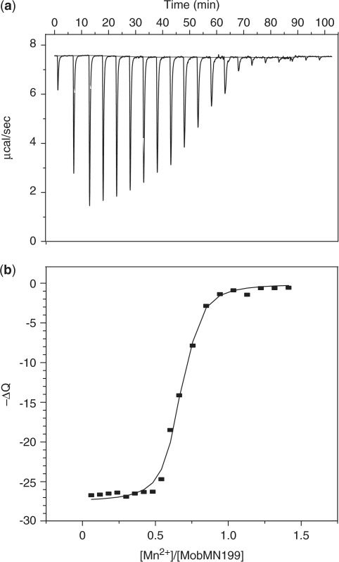 ITC binding analysis of Mn2+ by MobMN199. Raw data (top) for the injection of 1.5 mM MnCl2 into a solution of MobMN199 (75 µM) and integrated heats of injection (bottom) are shown. The solid line shows the best data fit assuming a Kb of 2.3 (±0.4) × 106 M−1 and a ΔHb, of −27.3 ± 0.3 kcal mol−1.