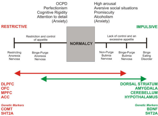 Neurobiological impulse-control model of temperamental dominance in ED.