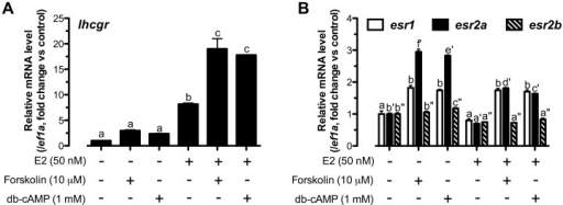 Pre-activation of cAMP enhanced E2-stimulated lhcgr expression likely by promoting follicle cell responsiveness to E2.Cells were administered with forskolin (10 µM) or db-cAMP (1 mM) for 24 h before a 3-h treatment of E2 (50 nM). Relative mRNA levels of (A) lhcgr, (B) esr1, esr2a and esr2b were expressed as fold change compared to the control group after normalization to the expression of ef1a. Different letters in each data set indicated statistical significance (P<0.05; mean ± SEM, n = 3).