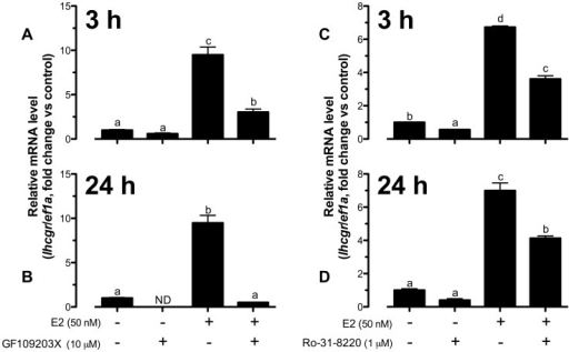 Both basal and E2-induced lhcgr expression were highly dependent on PKC pathway.Effect of GF109203X (A and B) and Ro-31-8220 (C and D) on basal and E2-stimulated lhcgr expression at 3 h and 24 h of treatment in cultured zebrafish follicle cells. The cells were pretreated with GF109203X (10 µM) or Ro-31-8220 (1 µM) for 15 min followed by treatment with E2 (50 nM) for 3 h or 24 h before the end of the 24-h treatment period. The data were expressed as fold change compared to the control group after normalization to the expression of ef1a. Different letters in each data set indicated statistical significance (P<0.05; mean ± SEM, n = 3–4).