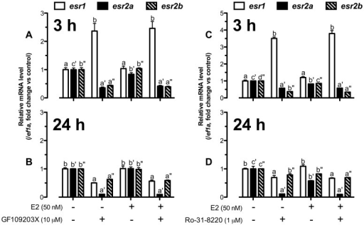 PKC pathway was crucial for nuclear estrogen receptor expression.The cultured follicle cells were pretreated with GF109203X (10 µM) or Ro-31-8220 (1 µM) for 15 min followed by treatment with E2 (50 nM) for 3 h (A and C) or 24 h (B and D) before the end of the 24-h treatment period. Quantification of mRNA level of esr1, esr2a and esr2b was carried out. The data were expressed as fold change compared to the control group after normalization to the expression of ef1a. Different letters in each data set indicated statistical significance (P<0.05; mean ± SEM, n = 3–4).