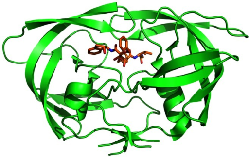 Three-dimensional structure of HIV-1 PR based on PDB structure 1EBZ drawn with software Pymol.HIV-1 PR is in green. Ligand is in orange, red and blue.