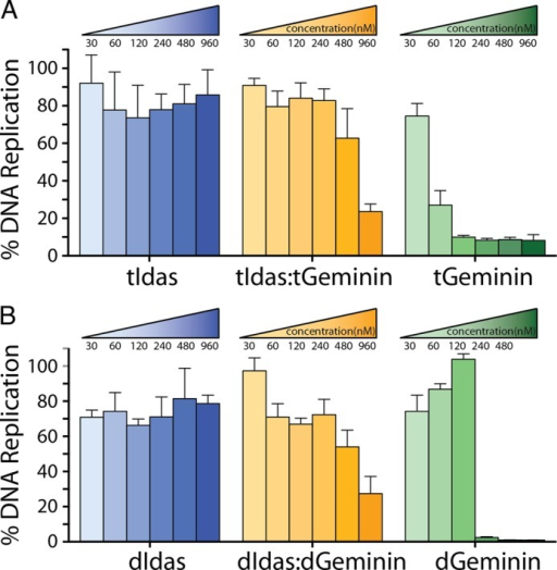 Idas inhibits Geminin function as an inhibitor of DNA replication in Xenopus egg extracts.A, increasing concentrations of tIdas-tIdas, tIdas-tGeminin, and tGeminin-tGeminin were assessed for their ability to inhibit DNA replication. DNA replication is presented as a percentage relative to 100% replication of buffer treated extract. S.E. are derived from three independent experiments. B, the same for the dIdas and dGeminin constructs.