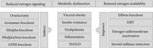 Different models have shown the influence of estrogens on metabolic-related inflammation. Loss of/decreased estrogen signaling through decreased production of estrogens or ERalpha, ERalpha/beta, or GPER inactivation promotes metabolic dysfunction revealed by visceral obesity, insulin resistance, dyslipidemia, inflammatory activation, and nonalcoholic fatty liver disease. On the other hand, promoting maintenance of estrogen signaling through hormone replacement therapy, blocking estrogen inactivation by estrogen sulfotransferase or increasing its reactivation from the estrogen-sulfate circulating pool by steroid sulfatase induction, tends to counteract metabolic dysfunction. Interestingly, inactivation of ERbeta also promotes metabolic health, showing the opposite metabolic effects mediated by both ER receptors. ER: estrogen receptor; GPER: G protein-coupled estrogen receptor; HRT: hormone replacement therapy; NAFLD: nonalcoholic fatty liver disease.