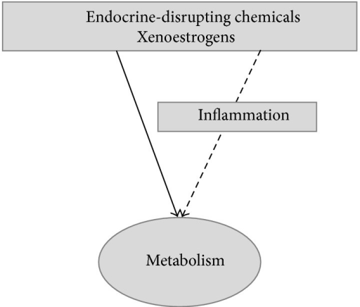Effects of xenoestrogens on inflammation may mediate their actions on metabolism.