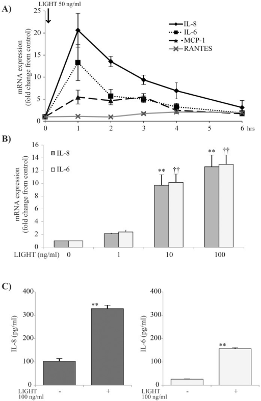Time-course and dose-dependent effects of LIGHT on bronchial epithelial (BEAS-2B) cells.(A) BEAS-2B cells were stimulated with 50 ng/ml LIGHT and examined for the time-course effect on expression of mRNA for each of IL-8, IL-6, MCP-1 and RANTES. LIGHT significantly induced mRNA for each of IL-6, IL-8 and MCP-1. n = 4 separate experiments. *: p<0.05, **: p<0.01 vs 0 h. (B) BEAS-2B cells were stimulated with various concentrations of LIGHT (0, 1, 10, 100 ng/ml) for 1 h and evaluated for expression of mRNA for each of IL-8 and IL-6. LIGHT induced IL-8 and IL-6 mRNA dose-dependently. n = 4 separate experiments. ** and ††: p<0.01 vs 0 ng/ml. (C) BEAS-2B cells were stimulated with 100 ng/ml LIGHT for 24 h, and the protein concentrations in the cell supernatants were determined by ELISA. LIGHT significantly induced IL-8 and IL-6 proteins. n = 6 separate experiments. **: p<0.01.