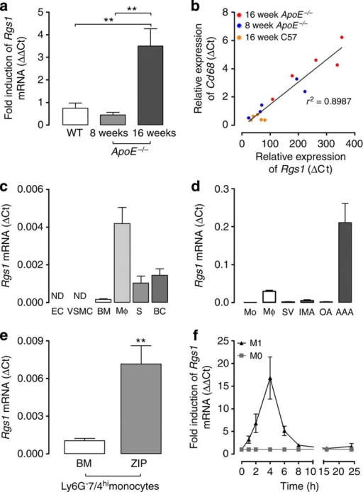 Rgs1 is upregulated by inflammatory stimuli in activated monocytes.(a) Confirmation of Rgs1 mRNA changes in thoracic aortas of ApoE−/− mice and wild-type controls on a high-fat diet (n=5 per group) by qRT–PCR. (b) Rgs1 expression is correlated with the expression of the macrophage marker Cd68 in thoracic aortas of ApoE−/− mice and wild-type controls on a high-fat diet. Each symbol represents an individual mouse (n=5 per group) by qRT–PCR. (c) qRT–PCR analysis of Rgs1 mRNA in primary cells isolated from ApoE−/− mice (n=5–6; BC, B cells; BM, bone marrow cells; EC, endothelial cells; MΦ, macrophages; S, splenocytes). (d) qRT-PCR analysis of Rgs1 expression in human tissue and cells. (Mo; Blood monocytes, plaque macrophages from carotid endarterectomies (n=3), SV; Saphenous vein and IMA; internal mammary artery from CABGs (n=8), OA; omental artery and AAA; abdominal aortic aneurysm from AAA repair patients (n=8–11)). (e) SV and IMA are from CABGs. qRT–PCR analysis of Rgs1 mRNA in Ly6G-7/4hi BM monocytes and peritoneal monocytes isolated from zymosan-induced peritonitis (ZIP) in ApoE−/− mice (n=6–7 per group). (f) qRT–PCR analysis of Rgs1 mRNA in bone marrow-derived macrophages from ApoE−/− mice stimulated with IFN-γ and lipopolysaccharide (M1) and unstimulated (M0) over 24 h presented relative to mRNA in unstimulated cells, set as 1. *P<0.05, **P<0.01 calculated using the Student's t-test (Data in a are expressed as mean±s.d. and data in c–f as mean±s.e.m.).