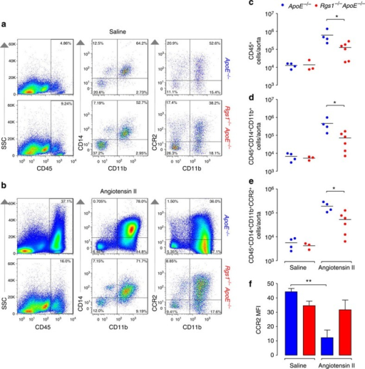 Rgs1 deficiency reduces aortic inflammatory cell trafficking in Ang II-treated ApoE−/− mice via CCR2.Flow cytometric analysis of aortic leukocytes in ApoE−/− and Rgs1−/−ApoE−/− mice that received (a) saline or (b) Ang II infusion at 0.8 mg kg−1 per day for 5 days. Representative dot plots shown for gated aortic cells of each positive population from ApoE−/− and Rgs1−/−ApoE−/− mice with representative percentages. Labels on both axes are on a log scale. Quantification of the numbers of (c) CD45+ cells (d) CD45+CD14+CD11b+ cells and (e) CD45+CD14+CD11b+CCR2+ cells in saline-treated and Ang II-infused mice. Each symbol represents an individual mouse (n=3–4 for saline and n=4–6 for Ang II). There were two deaths from aneurysm rupture in the ApoE−/− Ang II group. (f) The expression of CCR2 on CD45+CD14+CD11b+ cells in the aorta of saline-treated and Ang II-infused mice (MFI, mean fluorescence intensity). Values are expressed as mean±s.e.m. *P<0.05 and **P<0.01 calculated using the Student's t-test.