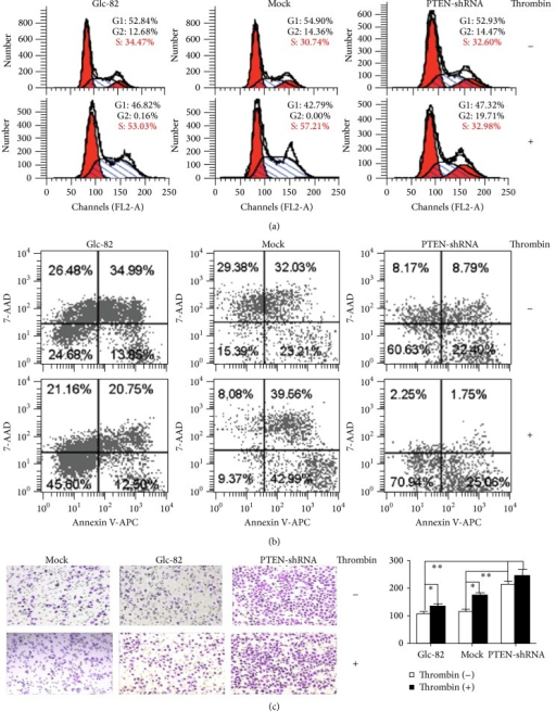 The role of PTEN in thrombin-mediated effects on Glc-82 cells. (a) The role of PTEN in thrombin-mediated promotion of Glc-82 cell cycle progression. Glc-82, Mock, and Glc-PTEN-shRNA cells were starved for 24 h in serum-free medium before treatment without or with thrombin (0.5 U/mL) for 12 h. The cell cycle was evaluated by flow cytometer analysis. (b) The role of PTEN in thrombin-mediated protection of Glc-82 cells from serum deprivation-induced apoptosis. Cells were starved for 48 h in serum-free RPMI 1640 medium. Thrombin (0.5 U/mL) was added and incubated for a further 96 h. The cells were then collected and analyzed on the flow cytometer within 1 h after staining. (c) The role of PTEN in thrombin-mediated promotion of Glc-82 cells migration. Cells were allowed to migrate for 20 h, cells in serum-free medium without or with thrombin (0.5 U/mL); then three different visual fields were randomly selected to count the cell number and calculate the average migration rate (*P < 0.05, **P < 0.01).