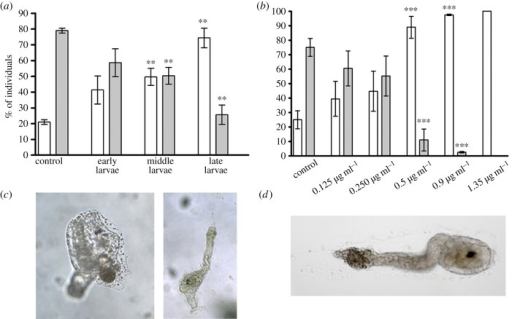 Decadienal (DD) induces a delay in metamorphosis at the time of competence. (a) Early, middle and late stage larvae were treated with 0.5 µg ml−1 DD. (b) Middle-late stage larvae were treated with different concentrations of DD (0.125, 0.25, 0.5, 0.9, 1.35 µg ml−1). After 24 h of treatment, the number of late larvae, larvae during tail regression (white bars) and juveniles (grey bars) were counted and reported as percentage of the total. Results are representative of 7 (a) and 10 (b) independent experiments. Data, expressed as means ± s.e.m., were assessed by unpaired t-test. Asterisks represent significant differences with respect to the control: **p < 0.01, ***p < 0.001. (c) Left panel shows untreated control juvenile and right panel shows abnormal juvenile after 72 h of incubation with 0.5 µg ml−1 DD. (d) Larva treated with 1.35 µg ml−1 DD after 24 h of treatment (toxic effect).