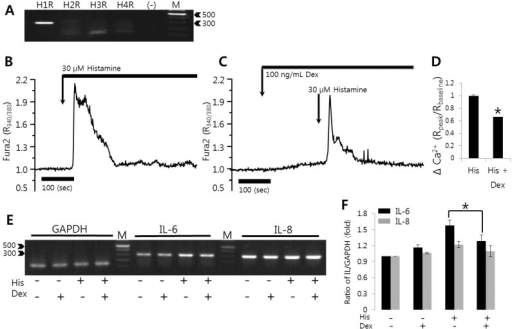 Histamine-induced [Ca2+]i signals were inhibited by dexmedetomidine in HSG cells. (A) Expression levels of histamine receptor mRNA (H1R to H4R) in HSG cells. (B) Changes in [Ca2+]i induced by 30 µM histamine. (C) Changes in [Ca2+]i after pretreatment with 100 ng/mL dexmedetomidine (Dex) and subsequent treatment with 30 µM histamine (His). (D) Evoked [Ca2+]i (Δ Ca2+) calculated by the peak value of 30 µM histamine stimulation in the presence or absence of 100 ng/mL dexmedetomidine. The upper bars indicate the extracellular solutions applied to the cells and traces were represented with average value. (E, F) After pre-treatment with 100 ng/mL dexmedetomidine for 30 min, HSG cells were stimulated with PBS or with 30 µM histamine for 90 min and then total RNAs were extracted and amplified with primers specific for IL-6, IL-8, and GAPDH. Data are from one of three experimental replicates. IL-6 and IL-8 mRNA expressions were quantified after normalizing to GAPDH levels as a loading control. Results are the mean±SEMs of three independent experiments. (-): no RNA, M: DNA ladder (bp), *p<0.01 was considered statistically significant.