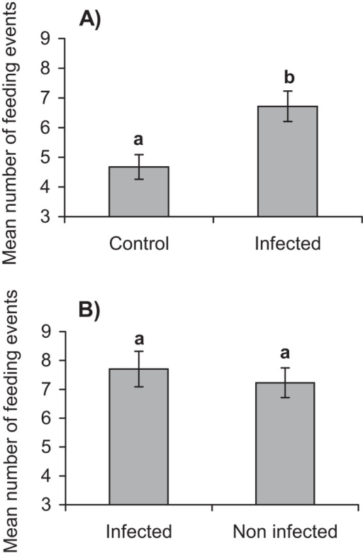 Number of feeding events (+ SE) of S. exigua larvae on spinach discs with different treatments.a) disc contaminated with virus-infected cadaver vs water (control) (n = 45); b) disc contaminated with infected cadaver vs non-infected cadaver (n = 45). Different letters indicate significant differences between groups (t test, p <0.05).