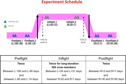 Experiment schedule.At each sampling point, two astronauts were paired and each astronaut took hair samples from the other astronaut by turns (sample number indicated in the text). L: Launch, R: Return.